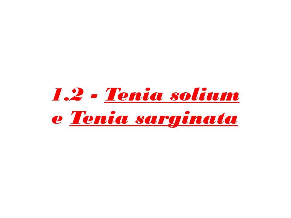 1.2 - Tenia solium e Tenia sarginata