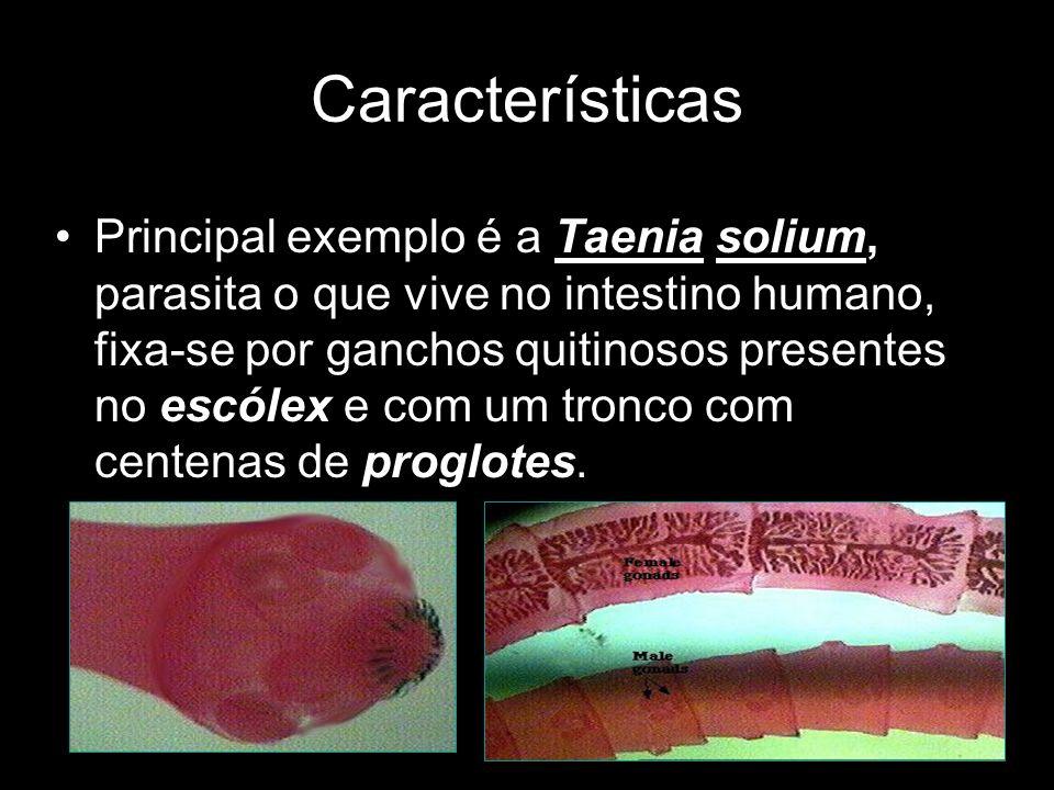 Principal exemplo é a Taenia solium, parasita o que vive no intestino humano, fixa-se por ganchos quitinosos presentes no escólex e com um tronco com