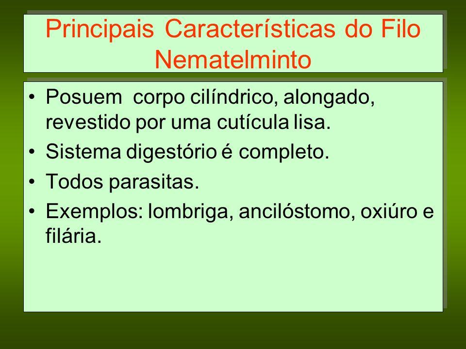 Principais Características do Filo Nematelminto Posuem corpo cilíndrico, alongado, revestido por uma cutícula lisa. Sistema digestório é completo. Tod