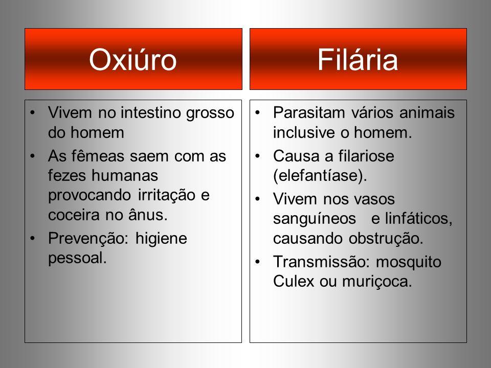 Oxiúro Vivem no intestino grosso do homem As fêmeas saem com as fezes humanas provocando irritação e coceira no ânus. Prevenção: higiene pessoal. Para