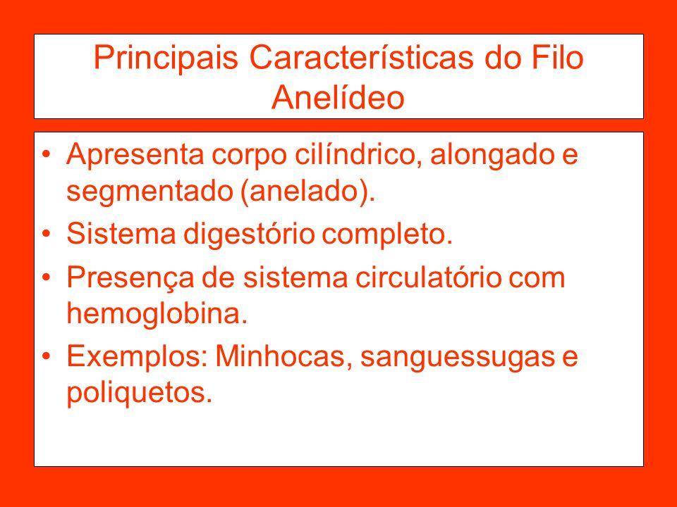 Principais Características do Filo Anelídeo Apresenta corpo cilíndrico, alongado e segmentado (anelado). Sistema digestório completo. Presença de sist
