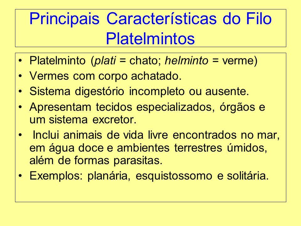 Principais Características do Filo Platelmintos Platelminto (plati = chato; helminto = verme) Vermes com corpo achatado. Sistema digestório incompleto