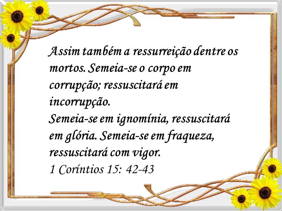 1 Coríntios 15:35-38 Mas alguém dirá: Como ressuscitarão os mortos? E com que corpo virão? Insensato! o que tu semeias não é vivificado, se primeiro n