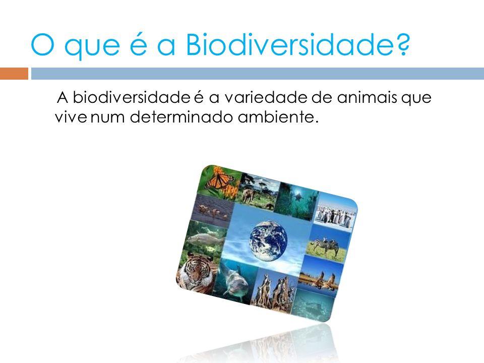 O que é a Biodiversidade? A biodiversidade é a variedade de animais que vive num determinado ambiente.