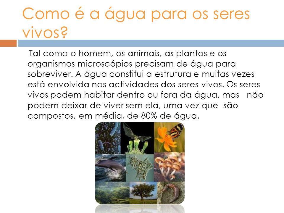 Como é a água para os seres vivos? Tal como o homem, os animais, as plantas e os organismos microscópios precisam de água para sobreviver. A água cons