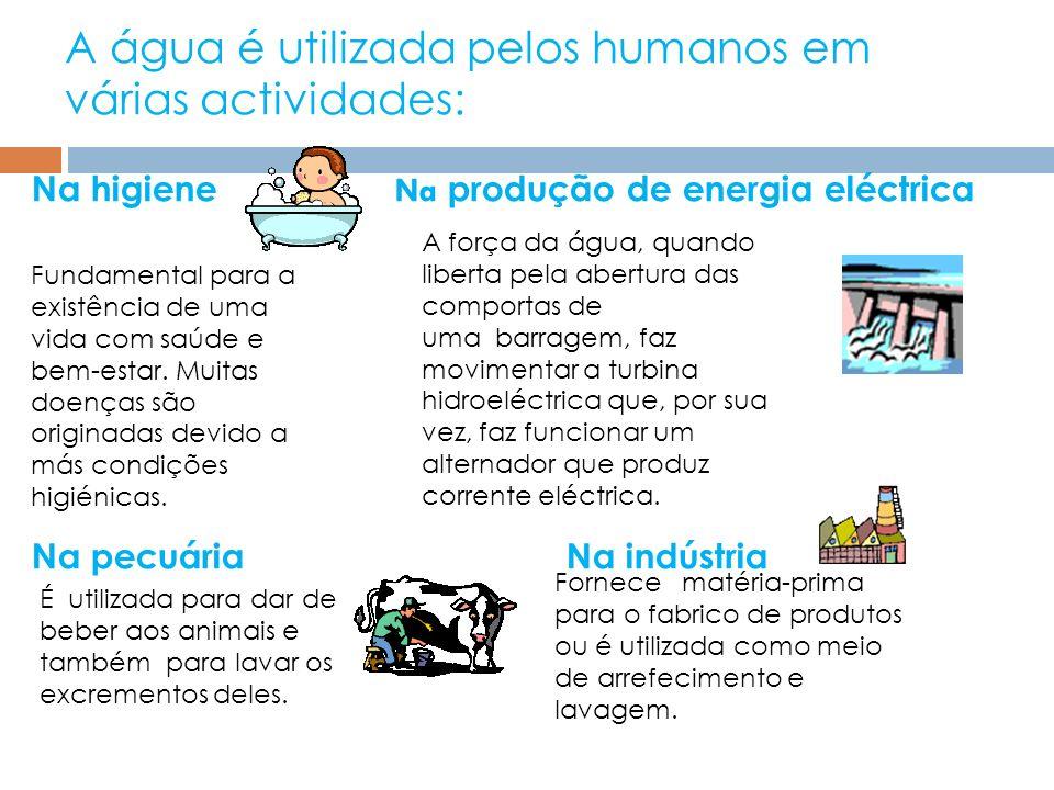 A água é utilizada pelos humanos em várias actividades: Na higiene Na produção de energia eléctrica Na pecuária Na indústria Fundamental para a existê