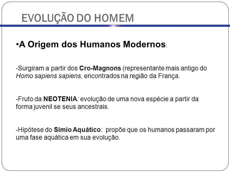 EVOLUÇÃO DO HOMEM A Origem dos Humanos Modernos : -Surgiram a partir dos Cro-Magnons (representante mais antigo do Homo sapiens sapiens, encontrados na região da França.