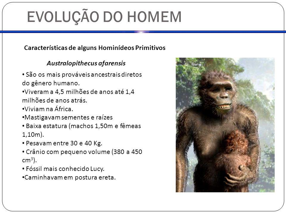 EVOLUÇÃO DO HOMEM Características de alguns Hominídeos Primitivos Australopithecus afarensis São os mais prováveis ancestrais diretos do gênero humano