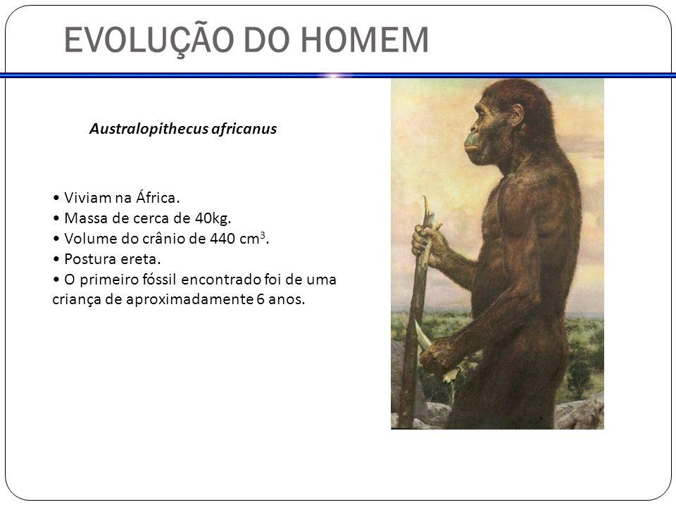 EVOLUÇÃO DO HOMEM Australopithecus africanus Viviam na África.