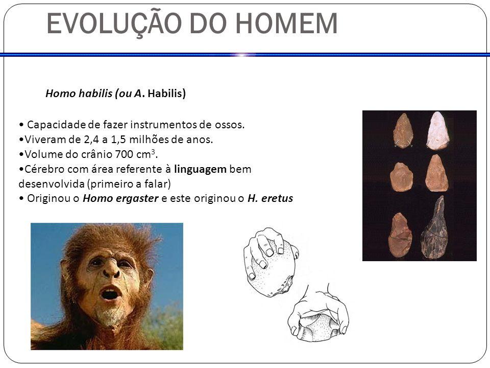 EVOLUÇÃO DO HOMEM Homo habilis (ou A. Habilis) Capacidade de fazer instrumentos de ossos. Viveram de 2,4 a 1,5 milhões de anos. Volume do crânio 700 c