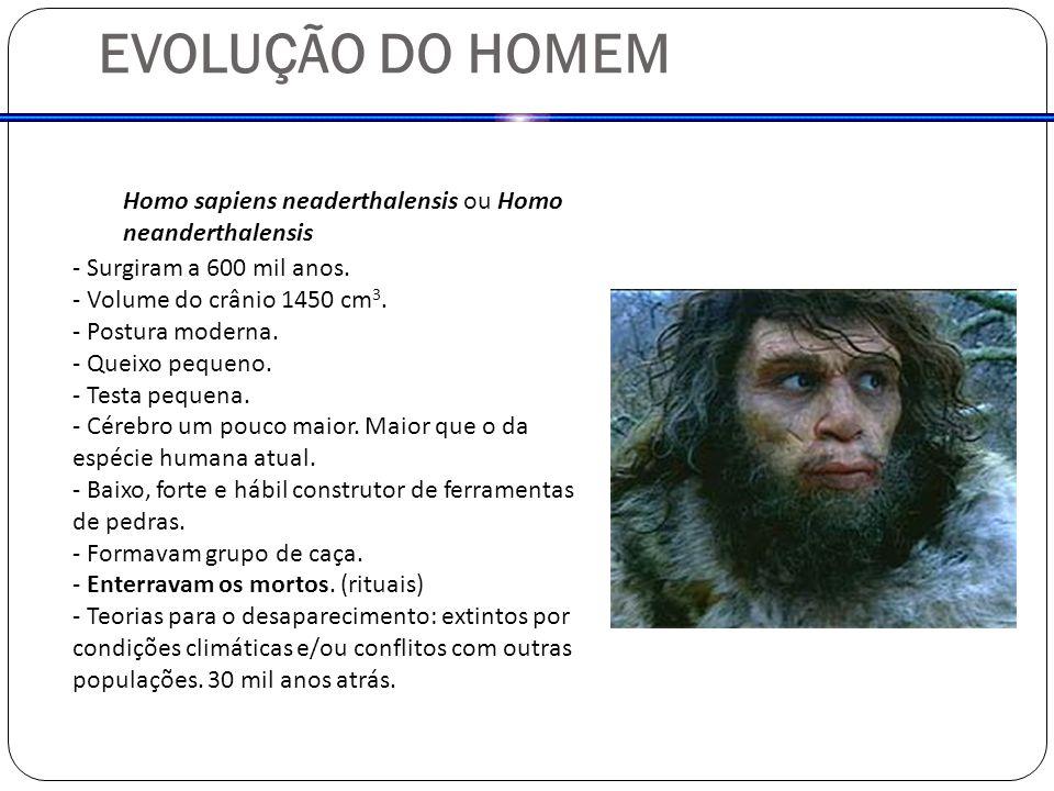 Homo sapiens neaderthalensis ou Homo neanderthalensis - Surgiram a 600 mil anos. - Volume do crânio 1450 cm 3. - Postura moderna. - Queixo pequeno. -