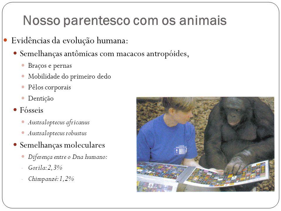 Nosso parentesco com os animais Evidências da evolução humana: Semelhanças antômicas com macacos antropóides, Braços e pernas Mobilidade do primeiro dedo Pêlos corporais Dentição Fósseis Australoptecus africanus Australoptecus robustus Semelhanças moleculares Diferença entre o Dna humano: - Gorila: 2,3% - Chimpanzé: 1,2%