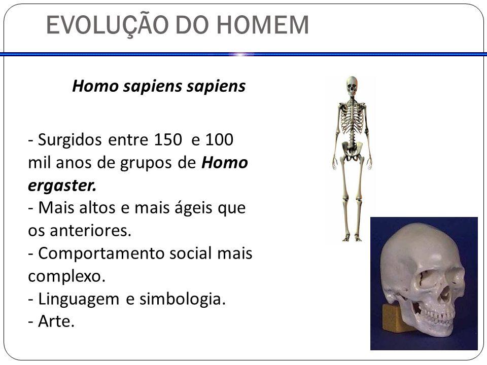 Homo sapiens sapiens - Surgidos entre 150 e 100 mil anos de grupos de Homo ergaster. - Mais altos e mais ágeis que os anteriores. - Comportamento soci