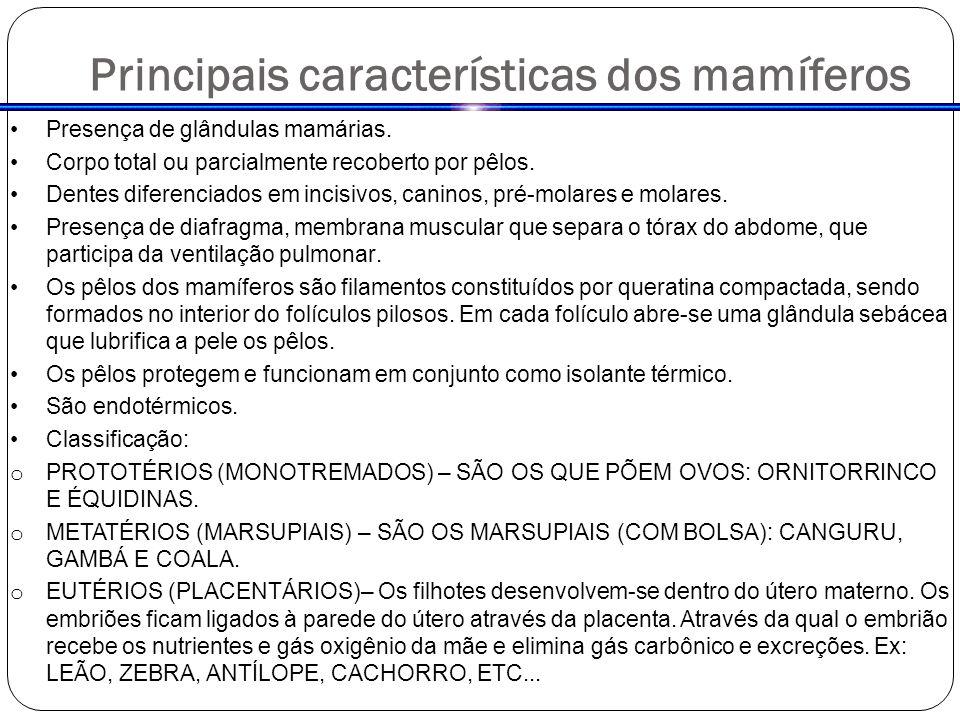 Principais características dos mamíferos Presença de glândulas mamárias.