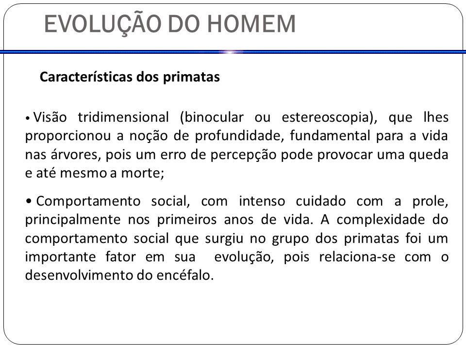 Homo sapiens Homo neanderthalensis