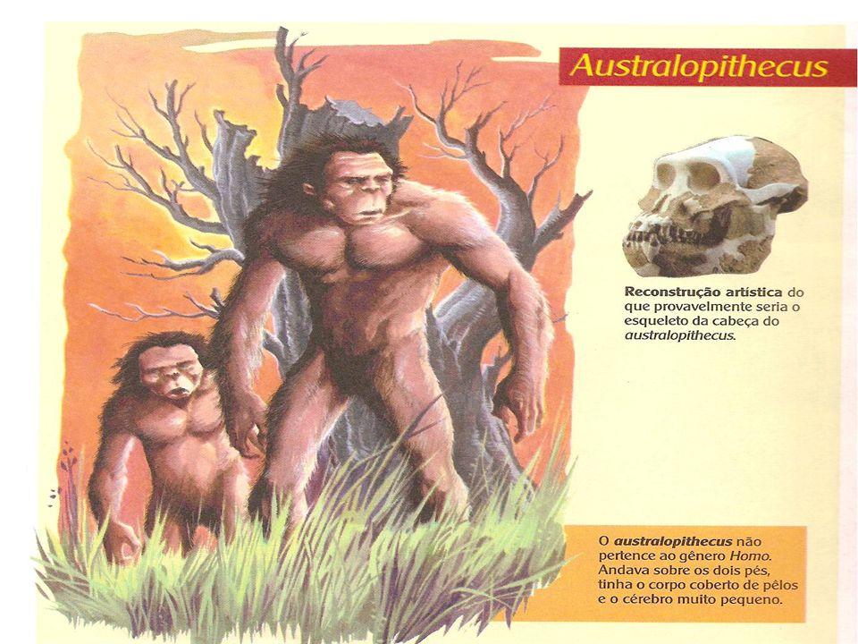 ARDIPITECOS - Viveram entre 5,5 e 4,5 milhões de anos atrás.A análise de fósseis do Ardipithecus ramidus, encontrados na Etiópia em 1974, indica que j