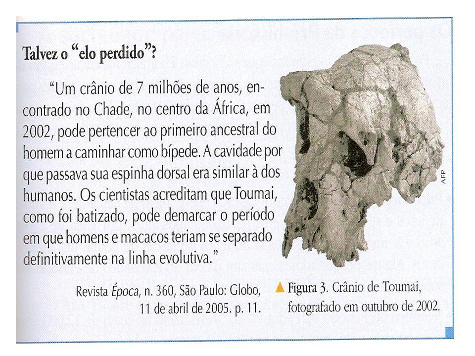 HOMO SAPIENS SAPIENS - Surgiu entre 200.000 e 100.000 anos atrás. Trata-se do homem moderno, o último da linha dos hominídeos.Desenvolveu a fala, a pi