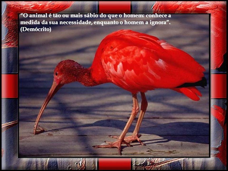 Não há diferenças fundamentais entre o homem e os Animais nas suas faculdades mentais... os animais, como os homens, demonstram sentir prazer, dor, fe