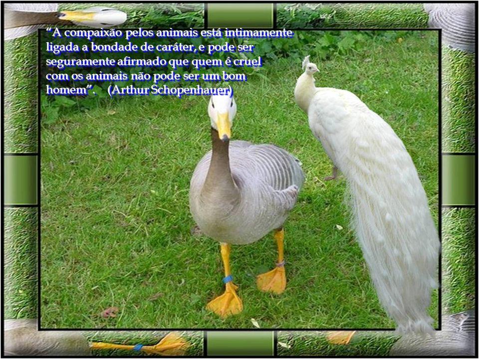 O animal é tão ou mais sábio do que o homem: conhece a medida da sua necessidade, enquanto o homem a ignora. (Demócrito)
