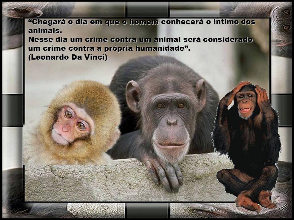 A compaixão pelos animais está intimamente ligada a bondade de caráter, e pode ser seguramente afirmado que quem é cruel com os animais não pode ser u