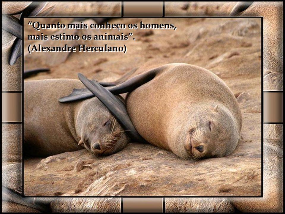 Não devemos mostrar a nossa cólera ou o nosso ódio senão por meio de atos. Os animais de sangue frio são os únicos que têm veneno. (Arthur Schopenhaue