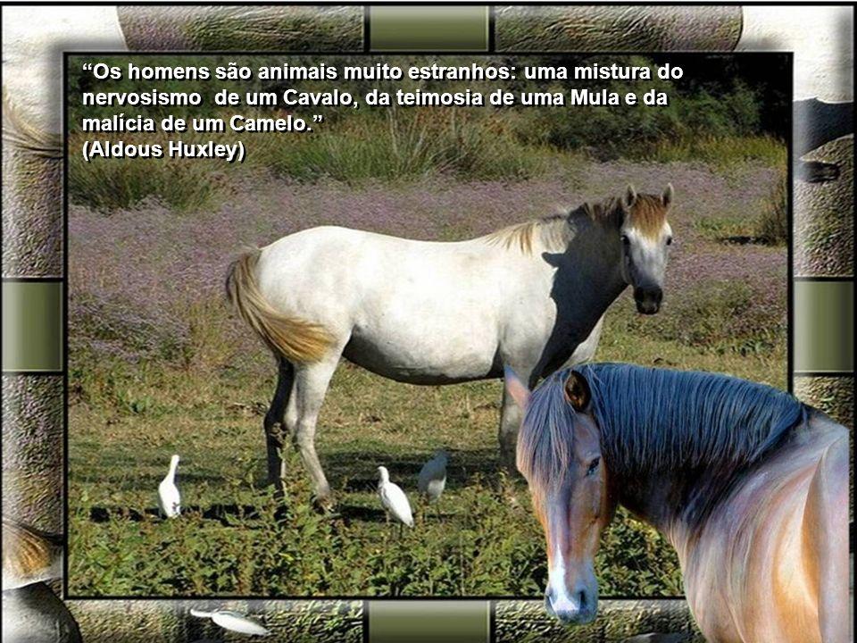Quanto mais conheço os homens, mais estimo os animais. (Alexandre Herculano) Quanto mais conheço os homens, mais estimo os animais. (Alexandre Hercula