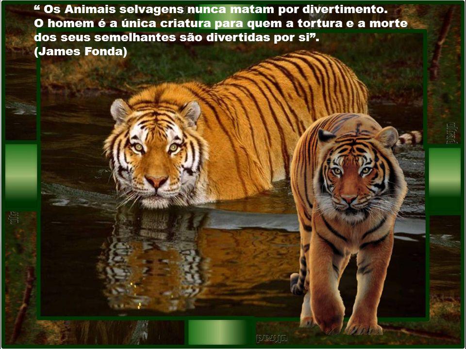 Antes de ter amado um animal, parte da nossa alma permanece desacordada. (Amatole France)