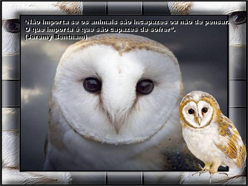 Os animais são bons amigos, não fazem perguntas e tão pouco criticam. (George Eliot)