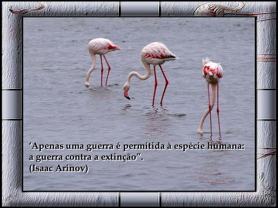 Não importa se os animais são incapazes ou não de pensar. O que importa é que são capazes de sofrer. (Jeremy Bentham) Não importa se os animais são in