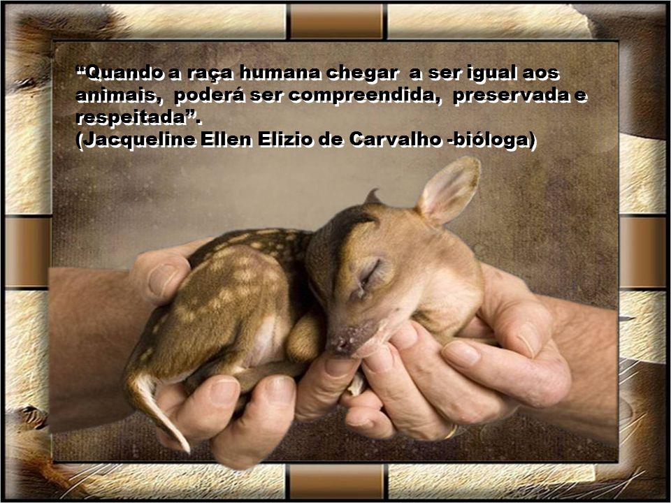 Creio que os animais são uns anjos que podem nos ensinar o que é fidelidade. (Wal Águia) Creio que os animais são uns anjos que podem nos ensinar o qu