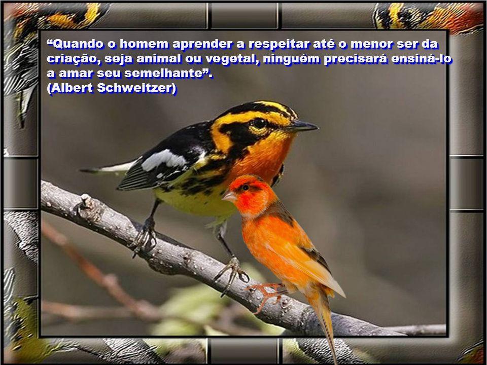 Quando o homem aprender a respeitar até o menor ser da criação, seja animal ou vegetal, ninguém precisará ensiná-lo a amar seu semelhante.