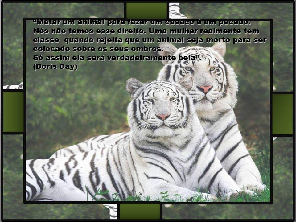 A compaixão para com os animais é das mais nobres virtudes da natureza humana. (Charles Darwin) A compaixão para com os animais é das mais nobres virt