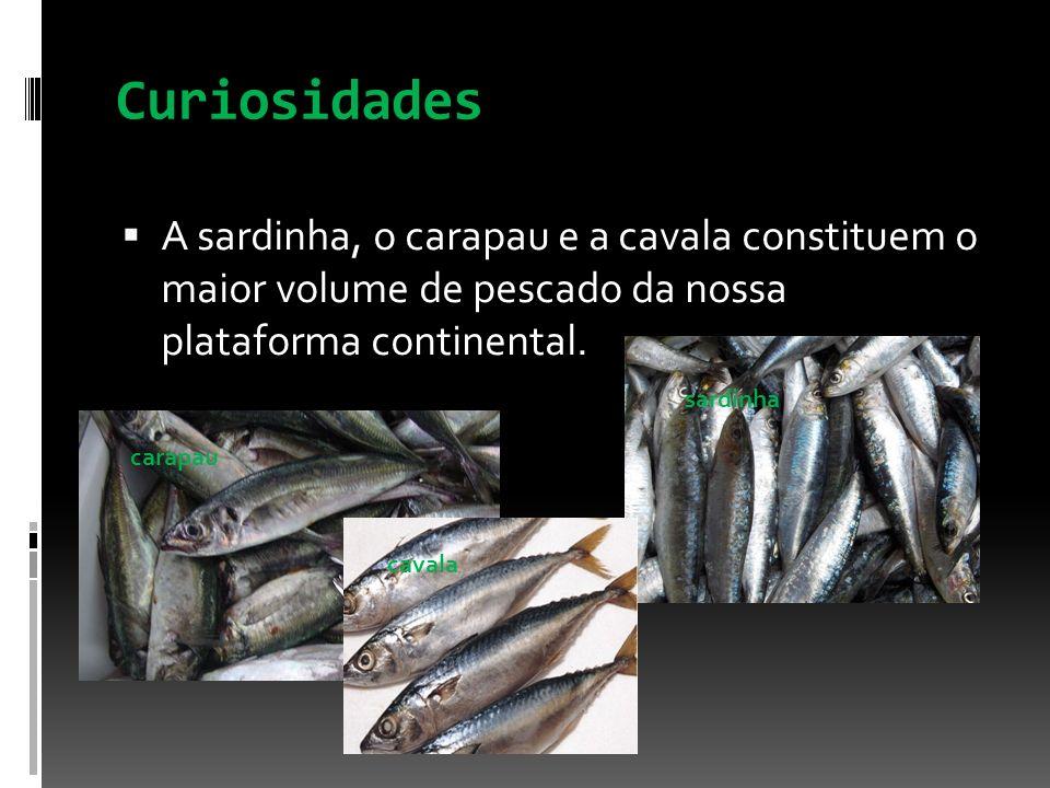 Curiosidades A sardinha, o carapau e a cavala constituem o maior volume de pescado da nossa plataforma continental. sardinha cavala carapau