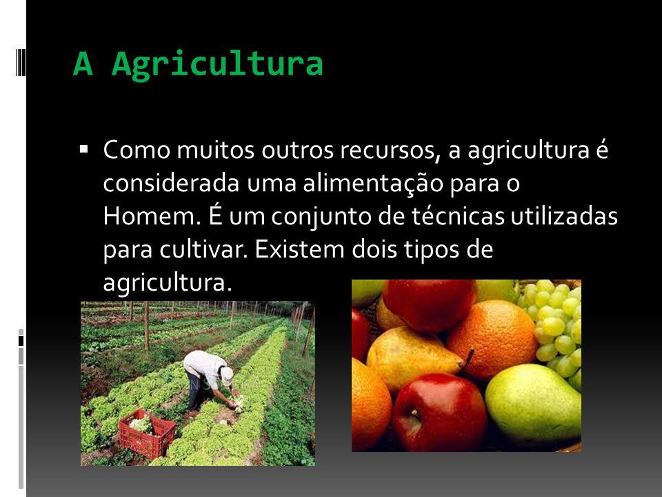 A Agricultura Como muitos outros recursos, a agricultura é considerada uma alimentação para o Homem. É um conjunto de técnicas utilizadas para cultiva