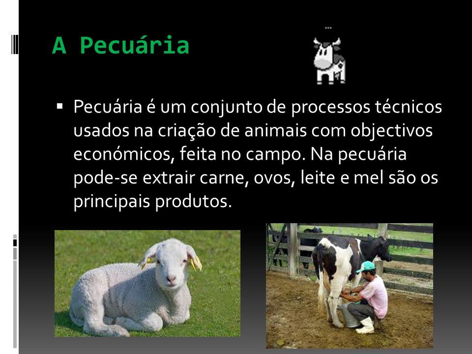 A Pecuária Pecuária é um conjunto de processos técnicos usados na criação de animais com objectivos económicos, feita no campo. Na pecuária pode-se ex