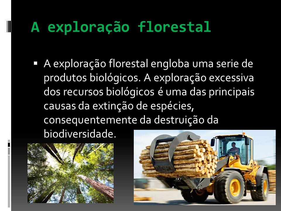 A exploração florestal A exploração florestal engloba uma serie de produtos biológicos. A exploração excessiva dos recursos biológicos é uma das princ