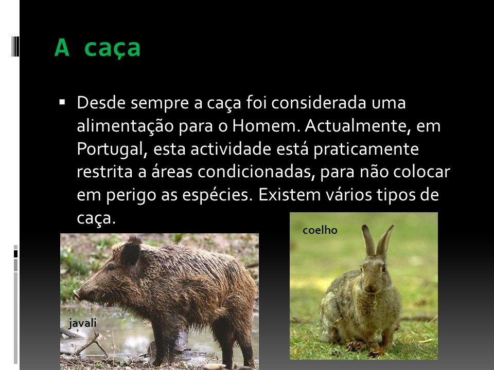 A caça Desde sempre a caça foi considerada uma alimentação para o Homem. Actualmente, em Portugal, esta actividade está praticamente restrita a áreas