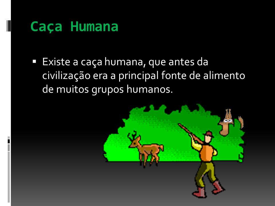 Caça Humana Existe a caça humana, que antes da civilização era a principal fonte de alimento de muitos grupos humanos.