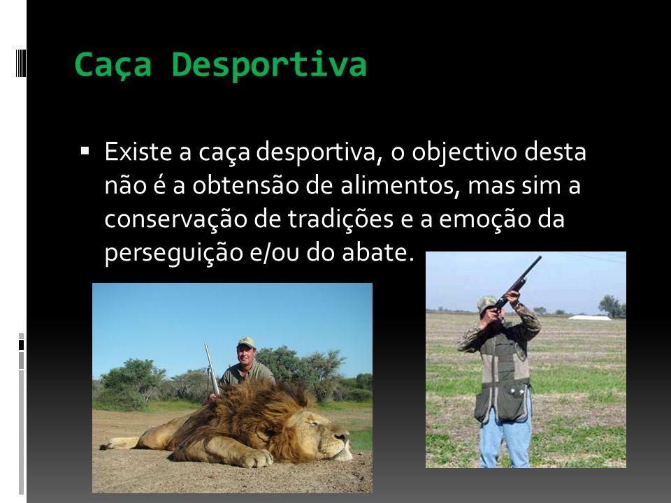 Caça Desportiva Existe a caça desportiva, o objectivo desta não é a obtensão de alimentos, mas sim a conservação de tradições e a emoção da perseguiçã