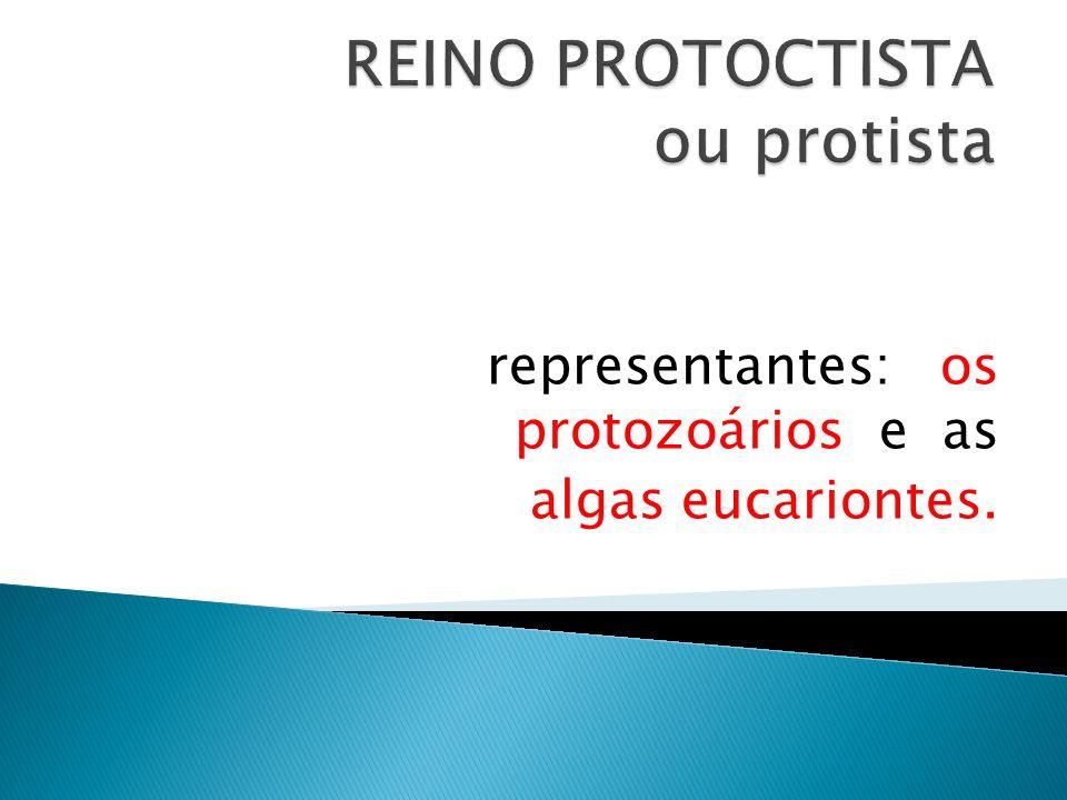 representantes: os protozoários e as algas eucariontes.