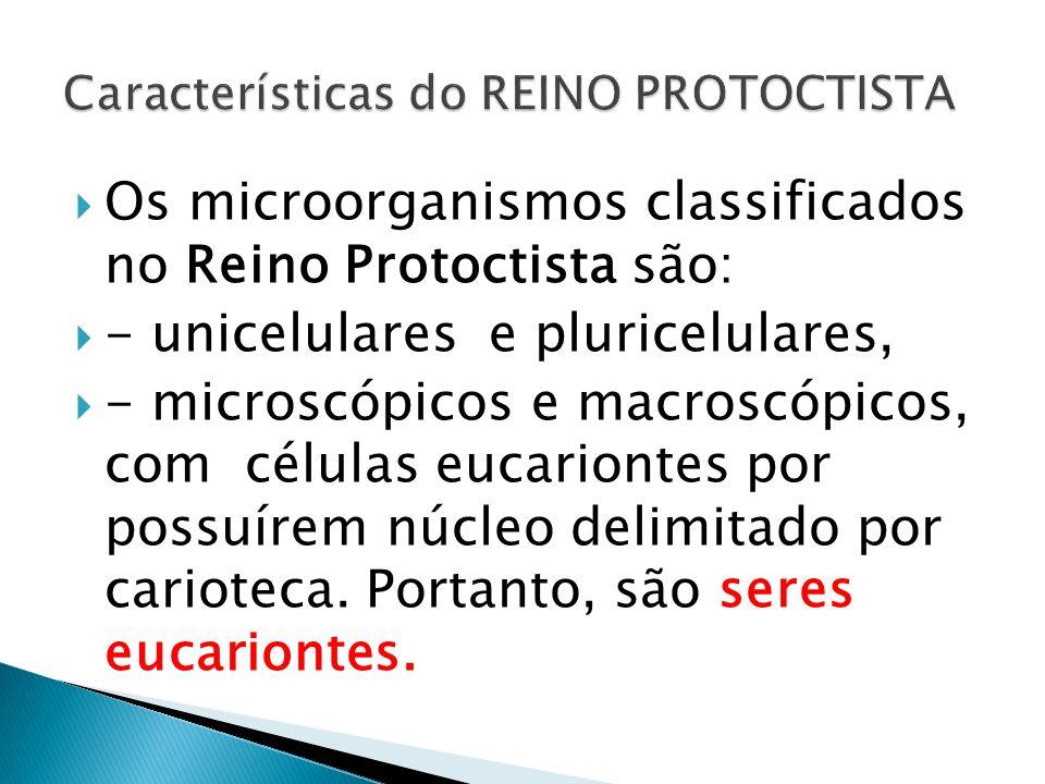 Os microorganismos classificados no Reino Protoctista são: - unicelulares e pluricelulares, - microscópicos e macroscópicos, com células eucariontes p