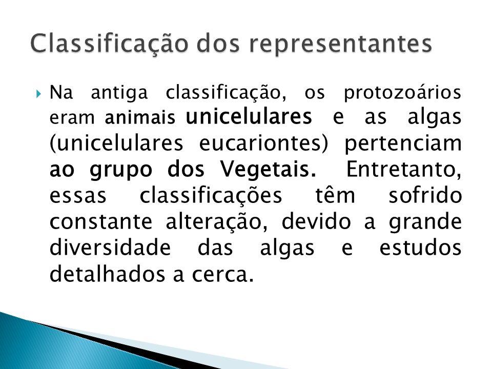 Na antiga classificação, os protozoários eram animais unicelulares e as algas (unicelulares eucariontes) pertenciam ao grupo dos Vegetais. Entretanto,