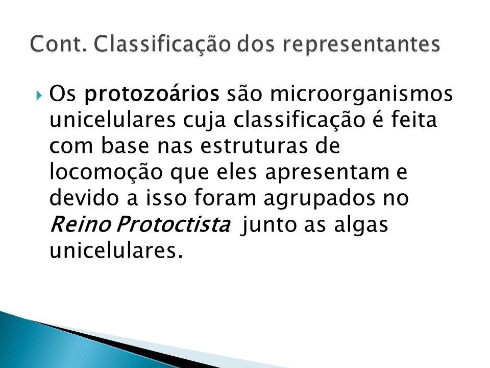 Os protozoários são microorganismos unicelulares cuja classificação é feita com base nas estruturas de locomoção que eles apresentam e devido a isso f