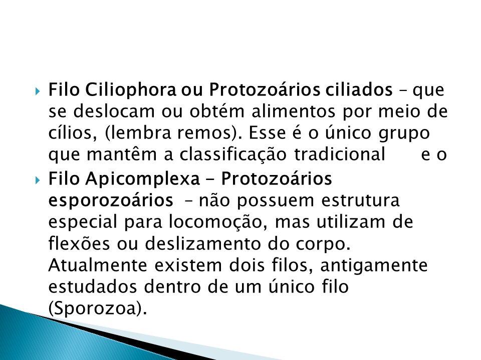 Filo Ciliophora ou Protozoários ciliados – que se deslocam ou obtém alimentos por meio de cílios, (lembra remos). Esse é o único grupo que mantêm a cl