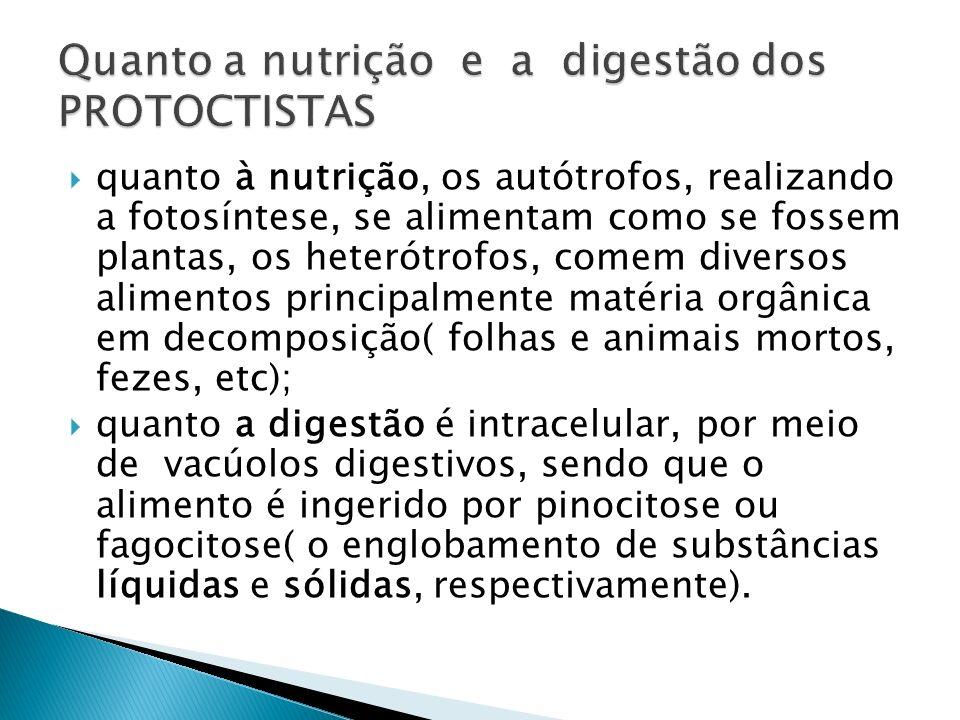 quanto à nutrição, os autótrofos, realizando a fotosíntese, se alimentam como se fossem plantas, os heterótrofos, comem diversos alimentos principalme
