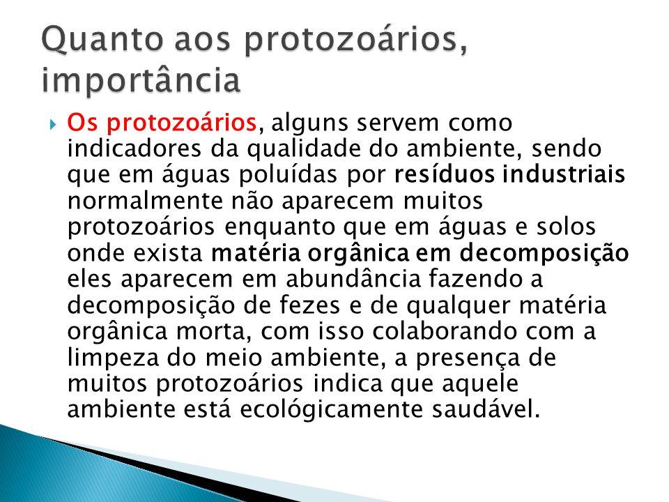 Os protozoários, alguns servem como indicadores da qualidade do ambiente, sendo que em águas poluídas por resíduos industriais normalmente não aparece