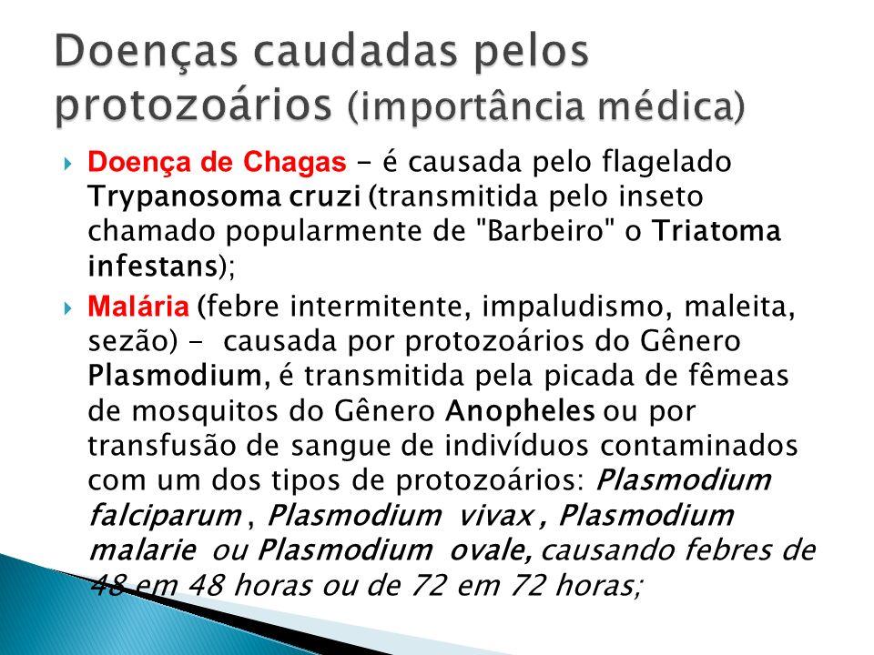 Doença de Chagas - é causada pelo flagelado Trypanosoma cruzi (transmitida pelo inseto chamado popularmente de