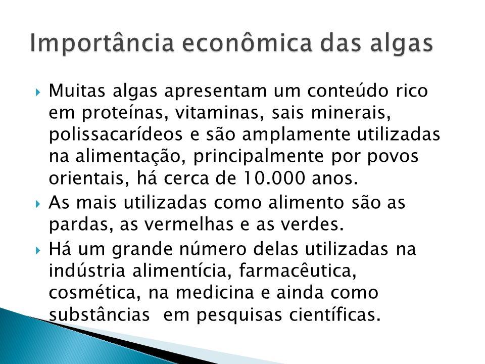 Muitas algas apresentam um conteúdo rico em proteínas, vitaminas, sais minerais, polissacarídeos e são amplamente utilizadas na alimentação, principal