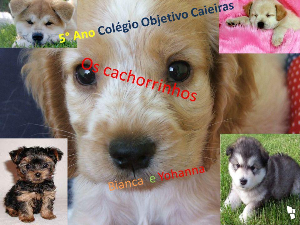 Os cachorrinhos Bianca e Yohanna 5° Ano Colégio Objetivo Caieiras