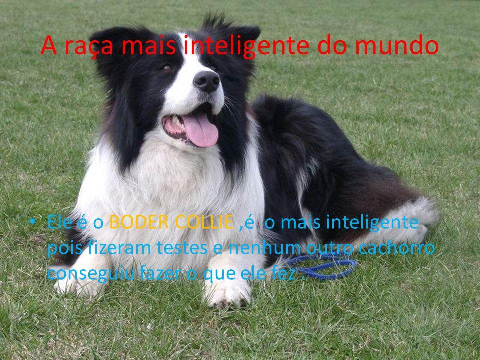 A raça mais inteligente do mundo Ele é o BODER COLLIE,é o mais inteligente pois fizeram testes e nenhum outro cachorro conseguiu fazer o que ele fez.